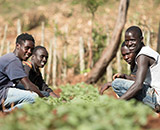 Potato work in the North Rift (Kenya), Photo: Hugh Rutherford for CIP